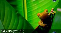 BBC. Как создавалась планета Земля [2 сезон] / BBC. How Earth Made Us (2012) SATRip