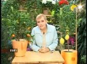 Как вырастить лимон дома (2011) SATRip