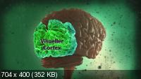 Испытайте свой мозг / Test Your Brain (2011) HDRip