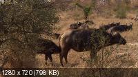 Великолепная семерка Африки / Africa's Super Seven (2006) BDRip 720p