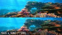 Шевели ластами! 3D / Sammy's avonturen: De geheime doorgang 3D (2010) BDRip 1080p