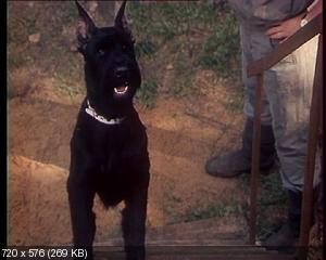 Воспитание жестокости у женщин и собак (1992) DVD9