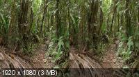 Джунгли 3D - Магия другого мира / Der Dschungel 3D - Zauber einer anderen Welt (2012) BDRip 1080p