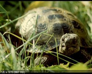 Внимание, черепаха! (1969) DVD5