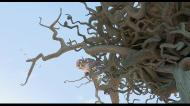 Замбезия / Zambezia (2012) Blu-ray + BDRemux + BDRip 1080p / 720p + DVD5 + HDRip