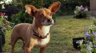 Крошка из Беверли-Хиллз 3 / Beverly Hills Chihuahua 3: Viva La Fiesta! (2012) HDRip